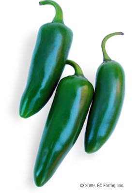 Pepper_jalapeno_green